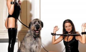 Красотки в латексе и большой пёс